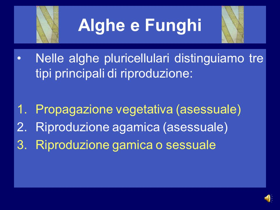 Alghe e Funghi Nelle alghe pluricellulari distinguiamo tre tipi principali di riproduzione: Propagazione vegetativa (asessuale)