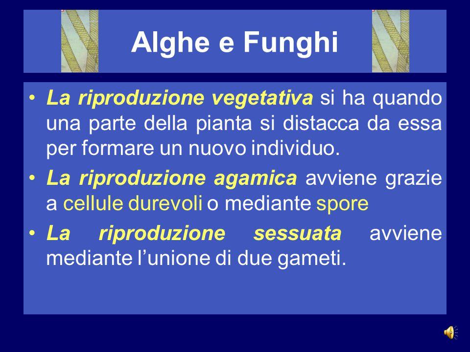 Alghe e Funghi La riproduzione vegetativa si ha quando una parte della pianta si distacca da essa per formare un nuovo individuo.
