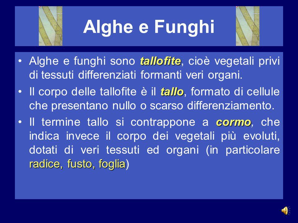 Alghe e Funghi Alghe e funghi sono tallofite, cioè vegetali privi di tessuti differenziati formanti veri organi.