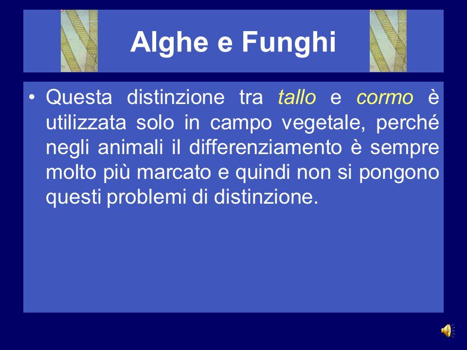 Alghe e Funghi