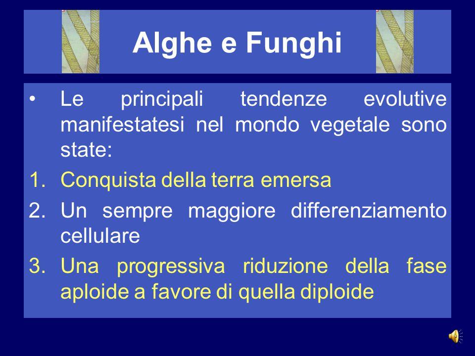 Alghe e Funghi Le principali tendenze evolutive manifestatesi nel mondo vegetale sono state: Conquista della terra emersa.