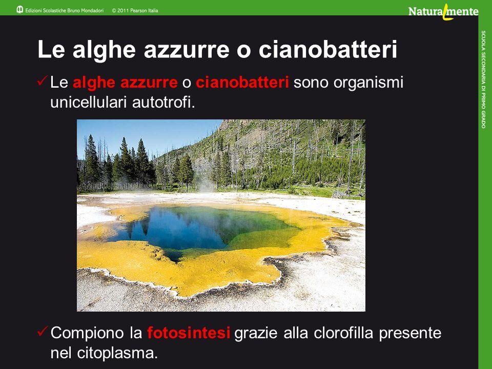 Le alghe azzurre o cianobatteri sono organismi unicellulari autotrofi.
