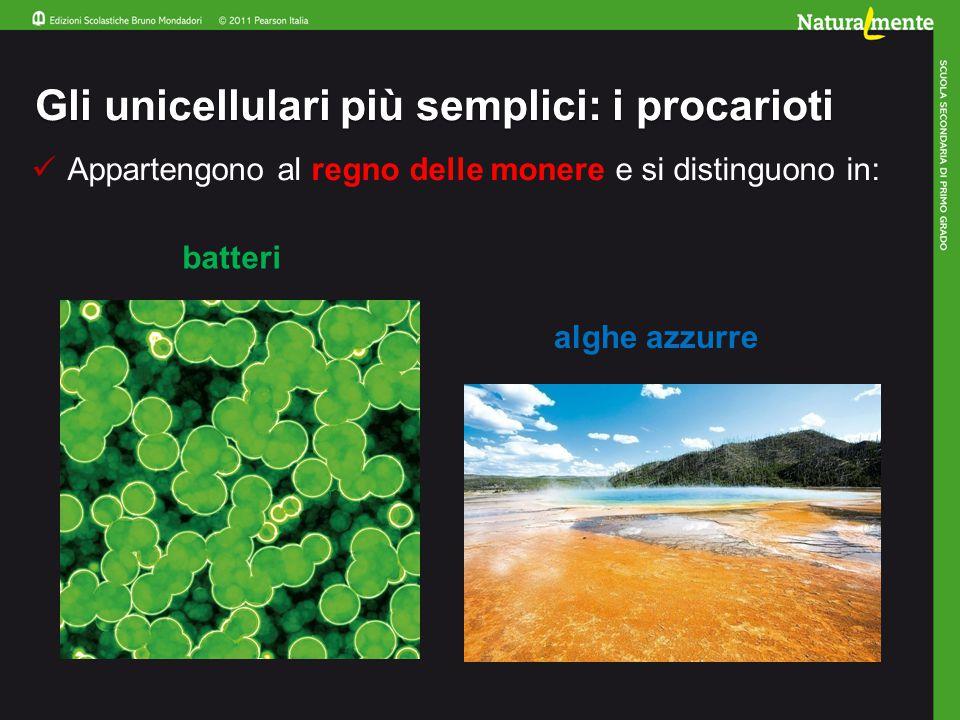 Gli unicellulari più semplici: i procarioti