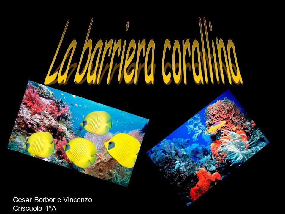 La barriera corallina Cesar Borbor e Vincenzo Criscuolo 1°A