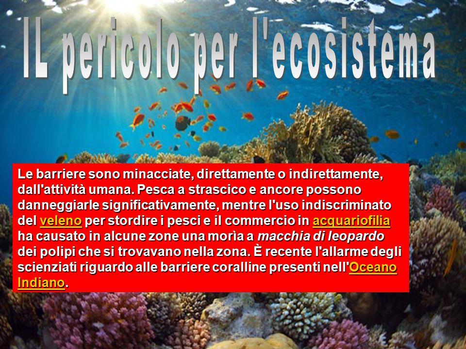 IL pericolo per l ecosistema