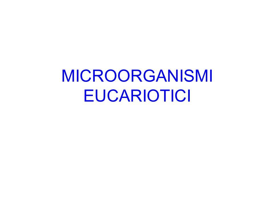 MICROORGANISMI EUCARIOTICI