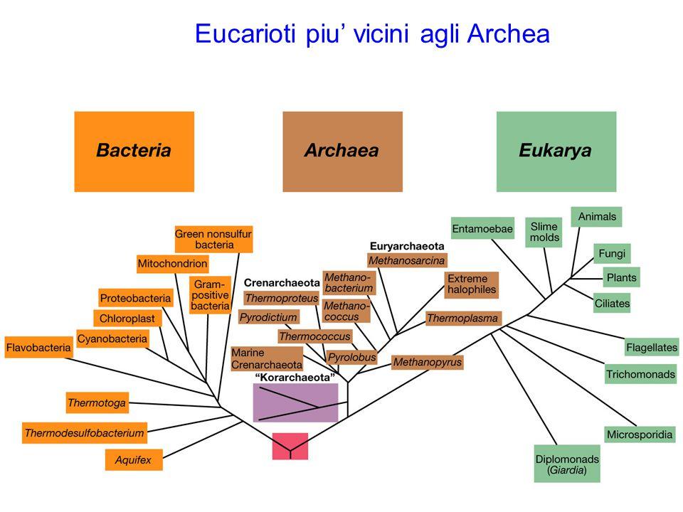 Eucarioti piu' vicini agli Archea