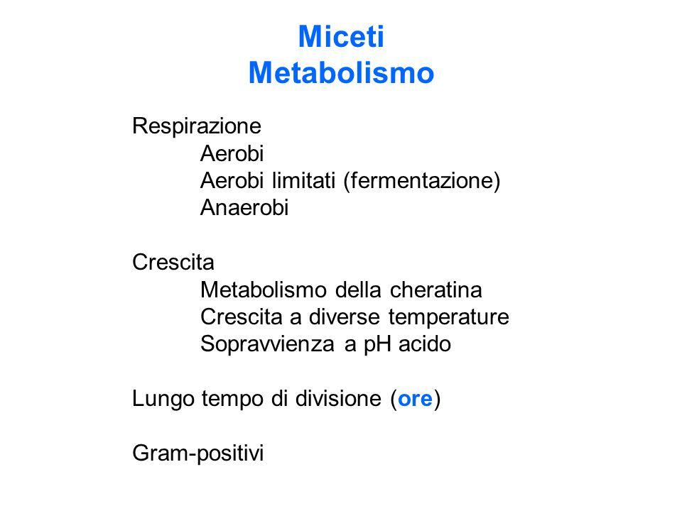 Miceti Metabolismo Respirazione Aerobi Aerobi limitati (fermentazione)