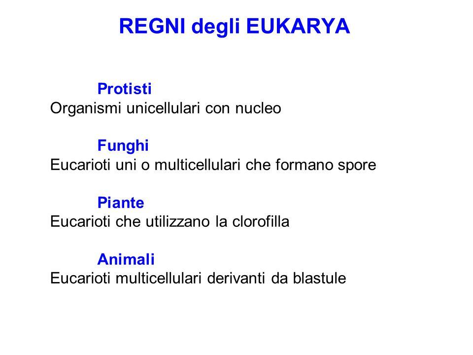 REGNI degli EUKARYA Protisti Organismi unicellulari con nucleo Funghi