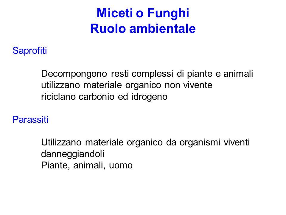 Miceti o Funghi Ruolo ambientale