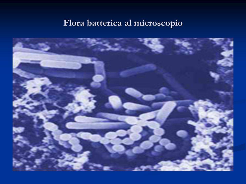 Flora batterica al microscopio