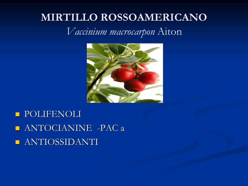 MIRTILLO ROSSOAMERICANO Vaccinium macrocarpon Aiton