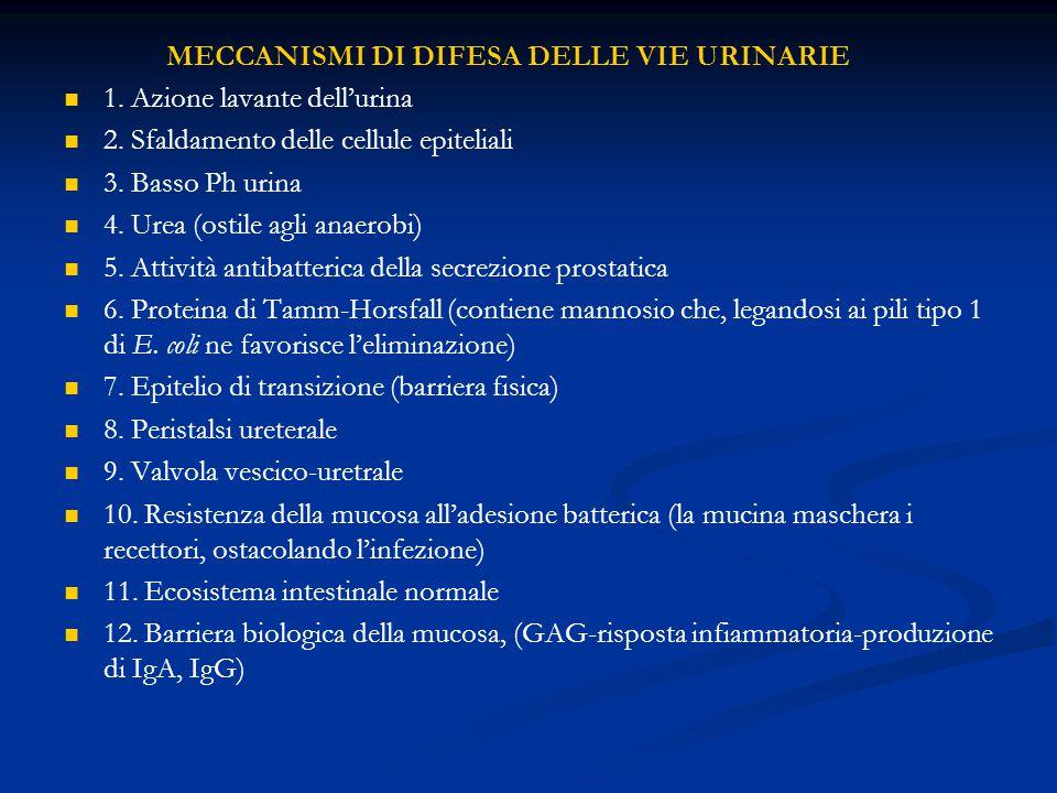 MECCANISMI DI DIFESA DELLE VIE URINARIE