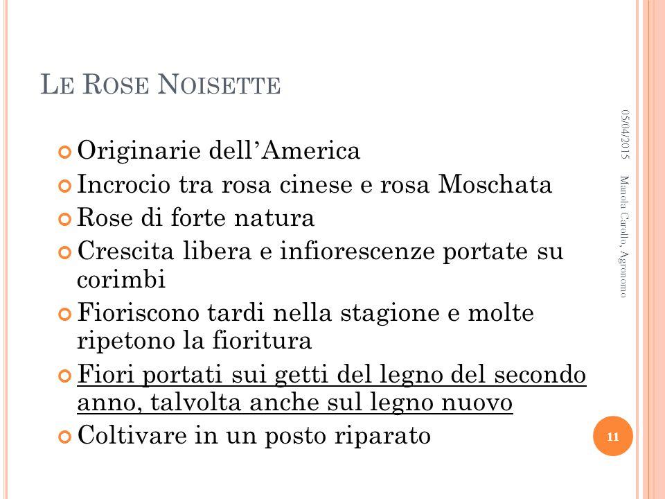 Le Rose Noisette Originarie dell'America