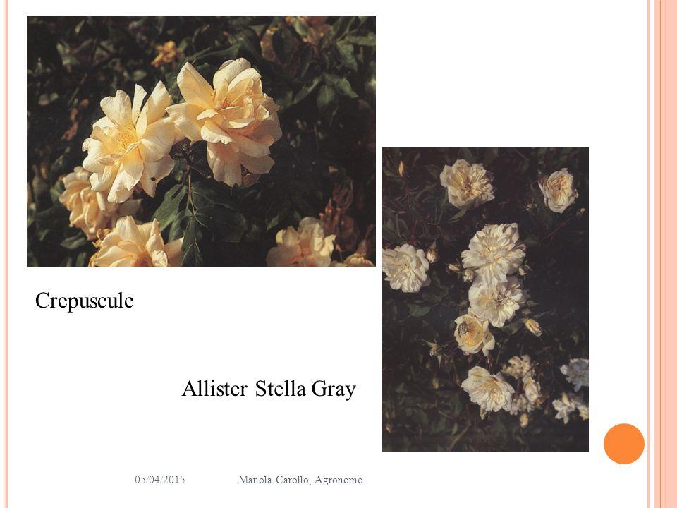 Crepuscule Allister Stella Gray 10/04/2017 Manola Carollo, Agronomo