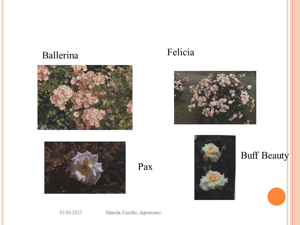 Felicia Ballerina Buff Beauty Pax 10/04/2017 Manola Carollo, Agronomo