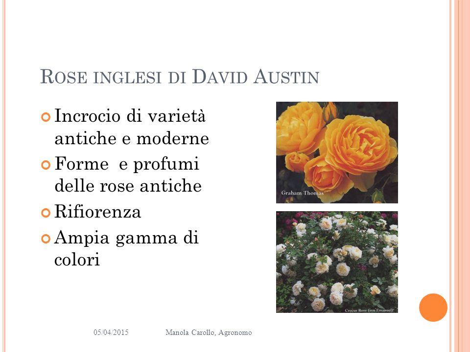 Rose inglesi di David Austin