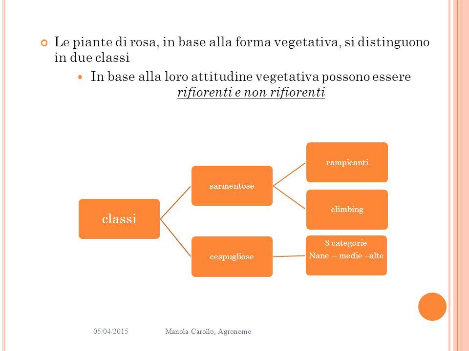 Le piante di rosa, in base alla forma vegetativa, si distinguono in due classi