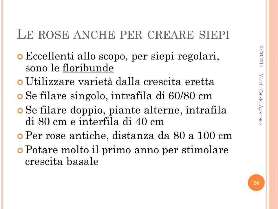 Le rose anche per creare siepi