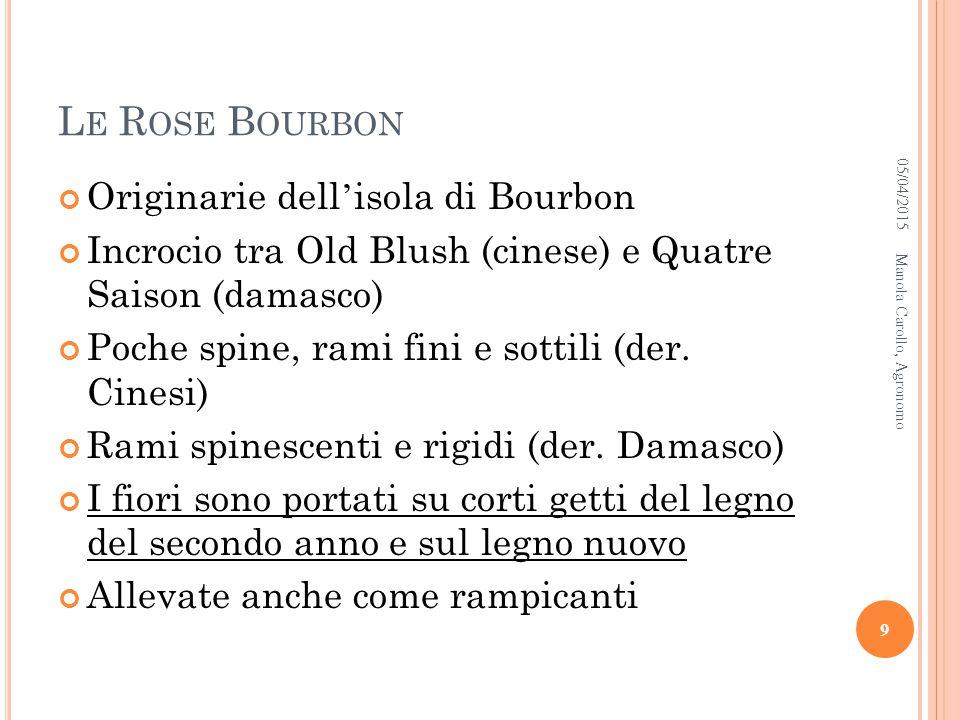 Le Rose Bourbon Originarie dell'isola di Bourbon