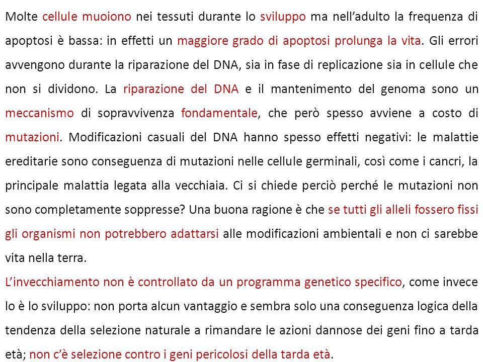 Molte cellule muoiono nei tessuti durante lo sviluppo ma nell'adulto la frequenza di apoptosi è bassa: in effetti un maggiore grado di apoptosi prolunga la vita. Gli errori avvengono durante la riparazione del DNA, sia in fase di replicazione sia in cellule che non si dividono. La riparazione del DNA e il mantenimento del genoma sono un meccanismo di sopravvivenza fondamentale, che però spesso avviene a costo di mutazioni. Modificazioni casuali del DNA hanno spesso effetti negativi: le malattie ereditarie sono conseguenza di mutazioni nelle cellule germinali, così come i cancri, la principale malattia legata alla vecchiaia. Ci si chiede perciò perché le mutazioni non sono completamente soppresse Una buona ragione è che se tutti gli alleli fossero fissi gli organismi non potrebbero adattarsi alle modificazioni ambientali e non ci sarebbe vita nella terra.