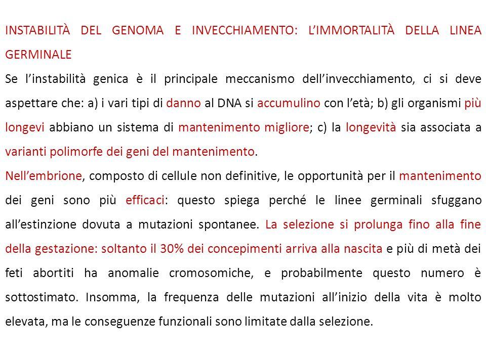 INSTABILITÀ DEL GENOMA E INVECCHIAMENTO: L'IMMORTALITÀ DELLA LINEA GERMINALE