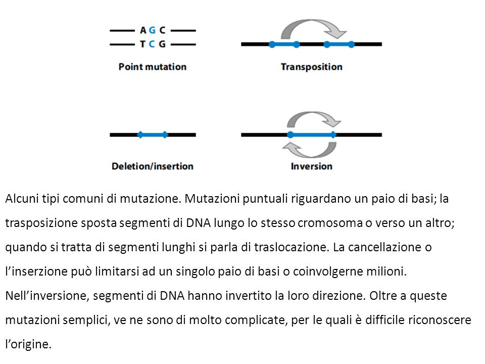 Alcuni tipi comuni di mutazione