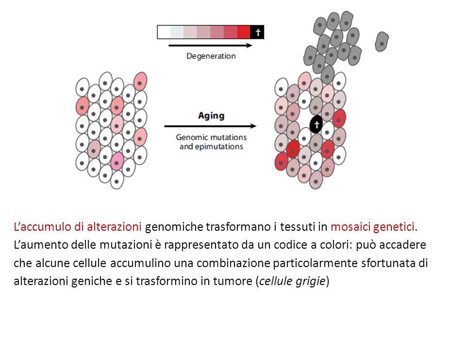 L'accumulo di alterazioni genomiche trasformano i tessuti in mosaici genetici.