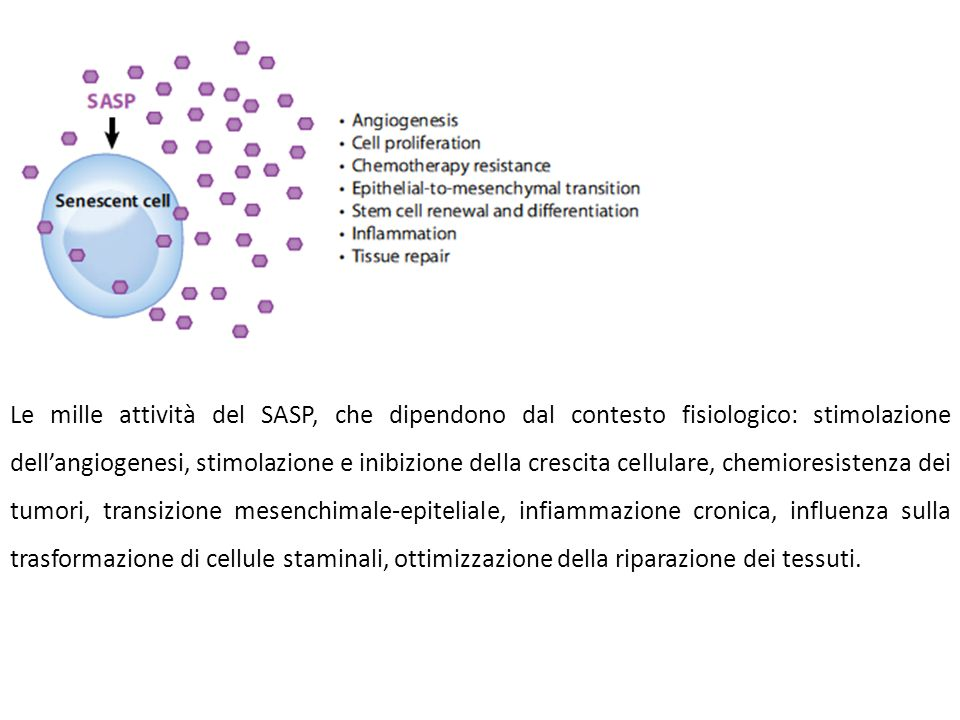 Le mille attività del SASP, che dipendono dal contesto fisiologico: stimolazione dell'angiogenesi, stimolazione e inibizione della crescita cellulare, chemioresistenza dei tumori, transizione mesenchimale-epiteliale, infiammazione cronica, influenza sulla trasformazione di cellule staminali, ottimizzazione della riparazione dei tessuti.