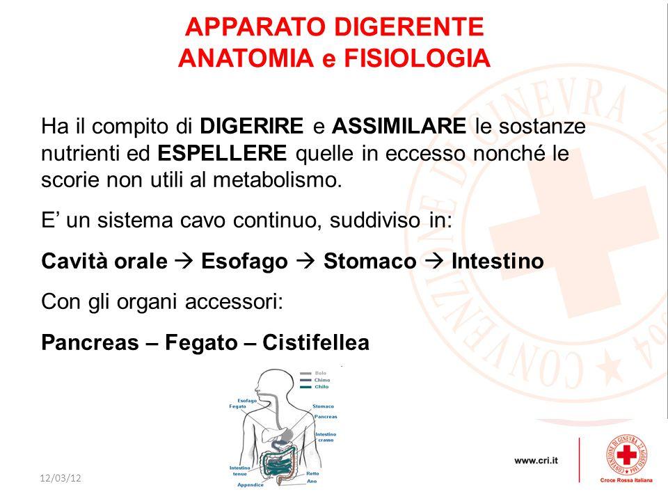 APPARATO DIGERENTE ANATOMIA e FISIOLOGIA