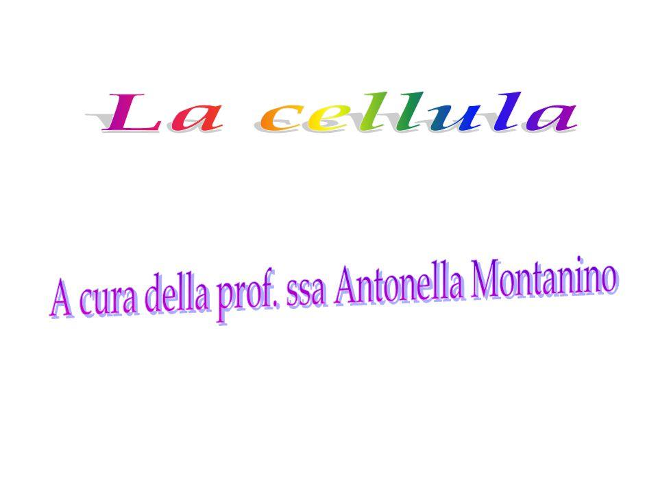 A cura della prof. ssa Antonella Montanino