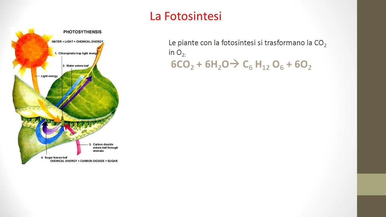 La Fotosintesi 6CO2 + 6H2O C6 H12 O6 + 6O2