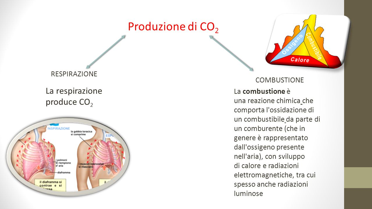 Produzione di CO2 La respirazione produce CO2 RESPIRAZIONE COMBUSTIONE