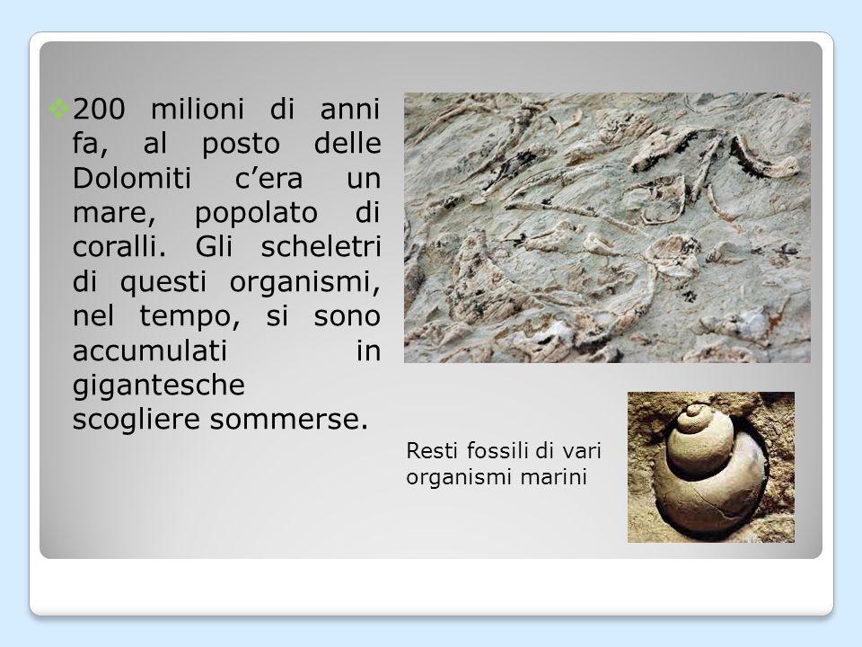 200 milioni di anni fa, al posto delle Dolomiti c'era un mare, popolato di coralli. Gli scheletri di questi organismi, nel tempo, si sono accumulati in gigantesche scogliere sommerse.