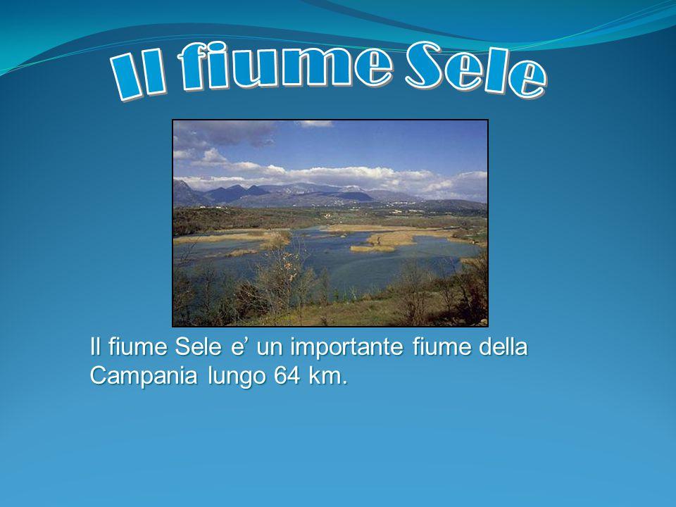 Il fiume Sele e' un importante fiume della Campania lungo 64 km.