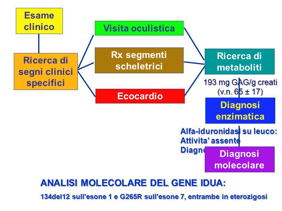 Rx segmenti scheletrici segni clinici specifici