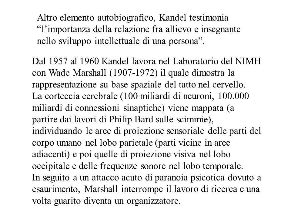 Altro elemento autobiografico, Kandel testimonia l'importanza della relazione fra allievo e insegnante nello sviluppo intellettuale di una persona .