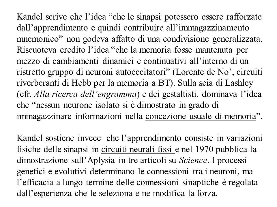 Kandel scrive che l'idea che le sinapsi potessero essere rafforzate dall'apprendimento e quindi contribuire all'immagazzinamento mnemonico non godeva affatto di una condivisione generalizzata. Riscuoteva credito l'idea che la memoria fosse mantenuta per mezzo di cambiamenti dinamici e continuativi all'interno di un ristretto gruppo di neuroni autoeccitatori (Lorente de No', circuiti riverberanti di Hebb per la memoria a BT). Sulla scia di Lashley (cfr. Alla ricerca dell'engramma) e dei gestaltisti, dominava l'idea che nessun neurone isolato si è dimostrato in grado di immagazzinare informazioni nella concezione usuale di memoria .