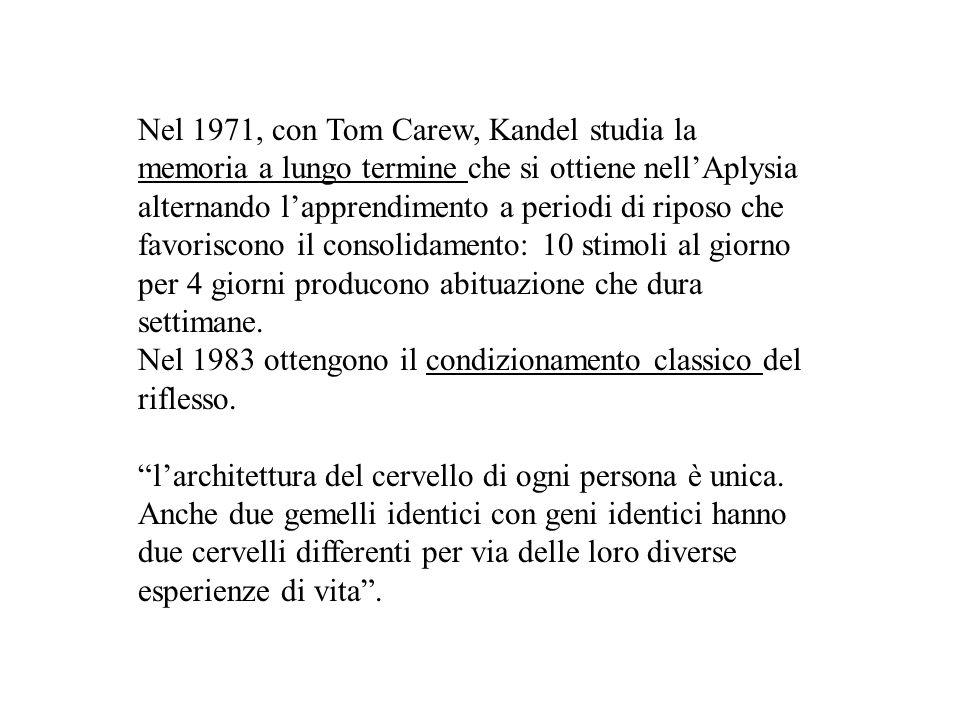 Nel 1971, con Tom Carew, Kandel studia la memoria a lungo termine che si ottiene nell'Aplysia alternando l'apprendimento a periodi di riposo che favoriscono il consolidamento: 10 stimoli al giorno per 4 giorni producono abituazione che dura settimane.