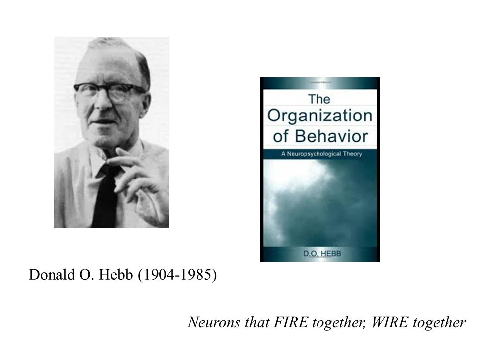 Donald O. Hebb (1904-1985) Neurons that FIRE together, WIRE together