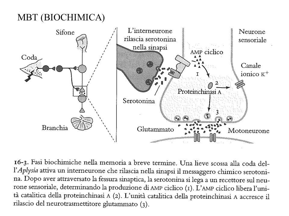 MBT (BIOCHIMICA)