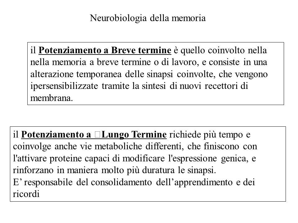 Neurobiologia della memoria