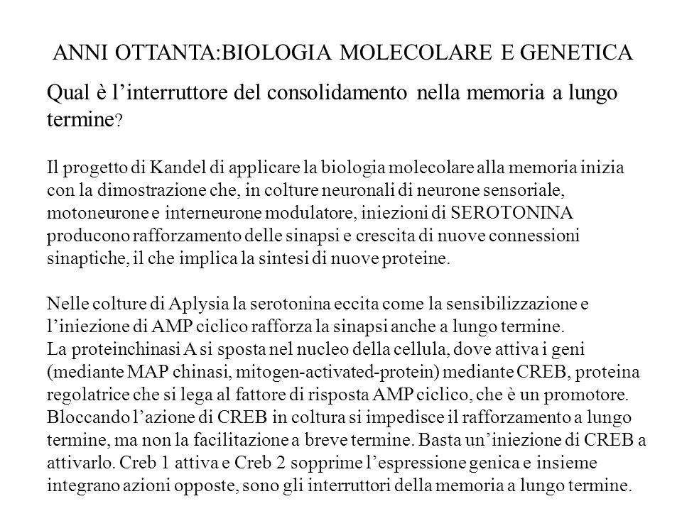 ANNI OTTANTA:BIOLOGIA MOLECOLARE E GENETICA
