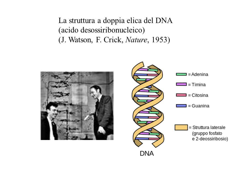 La struttura a doppia elica del DNA