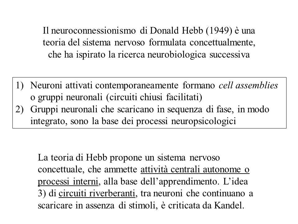 Il neuroconnessionismo di Donald Hebb (1949) è una teoria del sistema nervoso formulata concettualmente, che ha ispirato la ricerca neurobiologica successiva