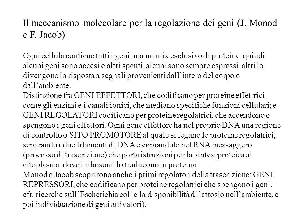 Il meccanismo molecolare per la regolazione dei geni (J. Monod e F