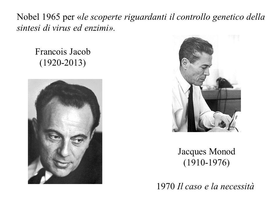Nobel 1965 per «le scoperte riguardanti il controllo genetico della sintesi di virus ed enzimi».