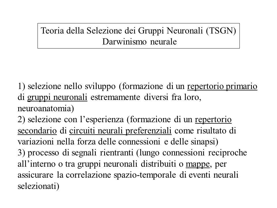 Teoria della Selezione dei Gruppi Neuronali (TSGN)