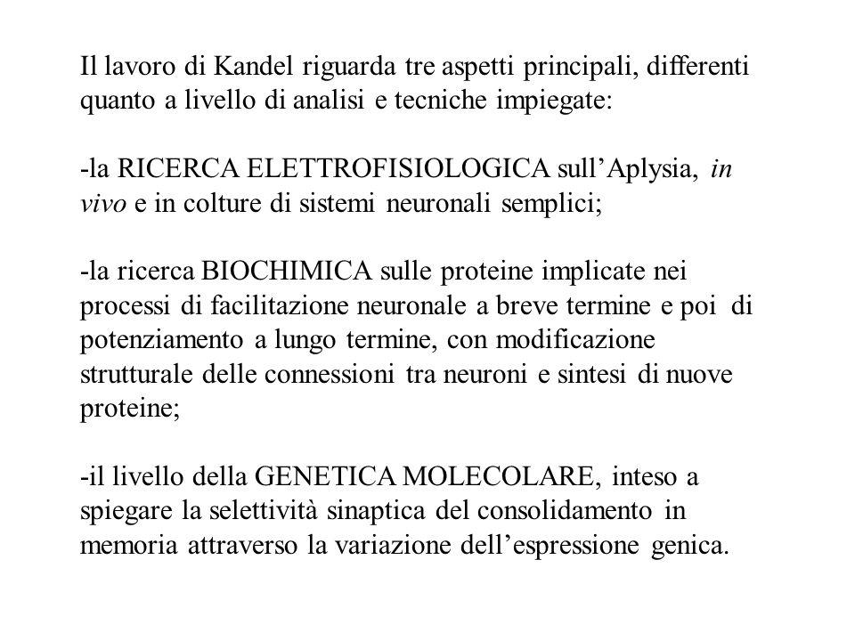 Il lavoro di Kandel riguarda tre aspetti principali, differenti quanto a livello di analisi e tecniche impiegate: