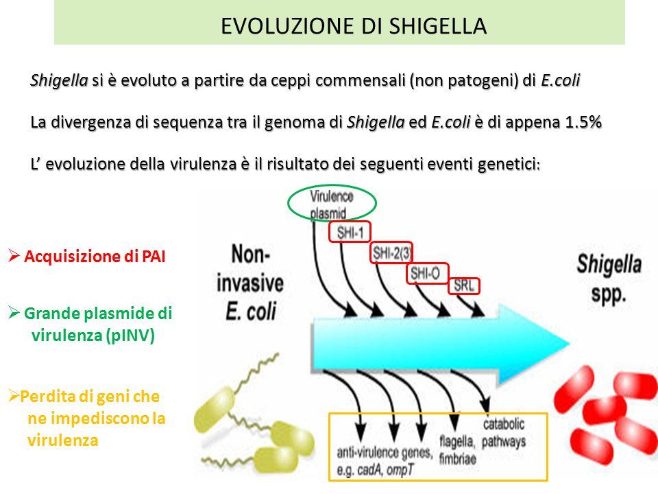 EVOLUZIONE DI SHIGELLA
